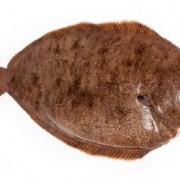 Dover sole importers and wholesalers Canada | Importateurs et grossistes de sole de Douvres