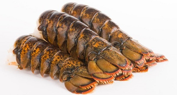 Lobster tails importers and wholesalers Canada | Importateurs et grossistes de queues de homard au Canada