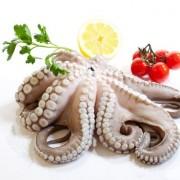 Octopus importers and wholesalers Canada | Importateurs et grossistes de poulpe au Canada