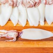 Squid importers and wholesalers Canada - Importateurs et grossistes de calmar au Canada